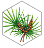 saw palmetto ingrédient activforte